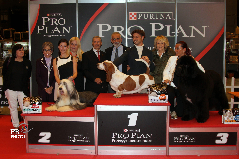 Лучшая собака выставки (BIS Сан-Ремо) - BIS CACIB Сан-Ремо (Италия), 14 ноября 2015 года