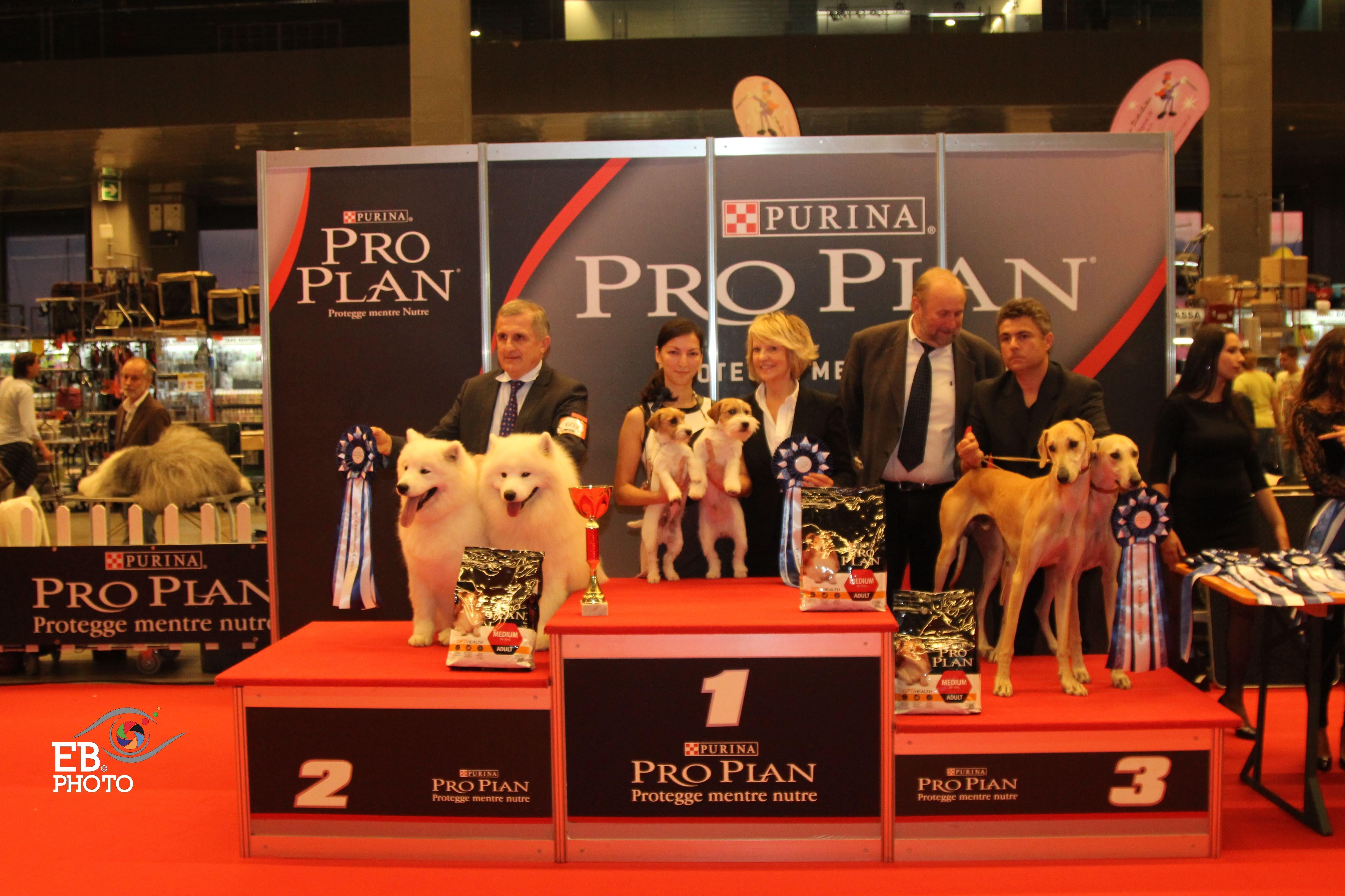 Best Brace - BIS CACIB Sanremo (Italy), 14 November 2015