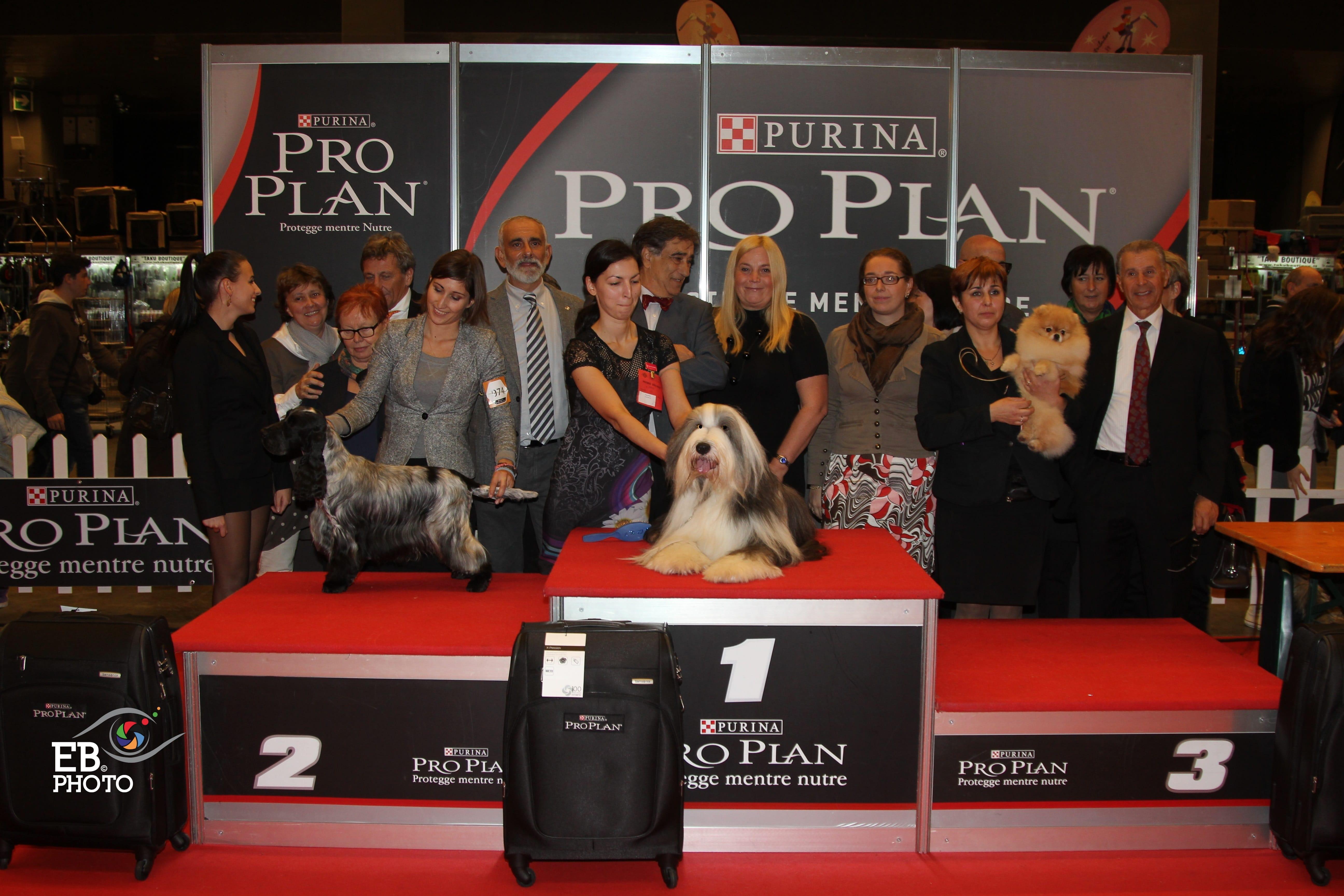 Лучшая собака выставки (BIS Генуя) - BIS CACIB Генуя (Италия), 15 ноября 2015 года